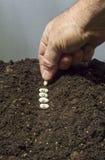 Plantera fröt av hopp Royaltyfria Foton