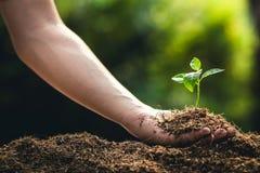 Plantera frukt och handen för trädtillväxtpassion som bevattnar i naturljus och bakgrund arkivbilder