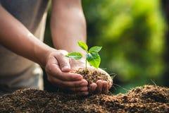 Plantera frukt och handen för trädtillväxtpassion som bevattnar i naturljus och bakgrund arkivfoto