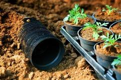 plantera krukan Royaltyfri Foto