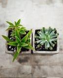 plantera krukan fotografering för bildbyråer