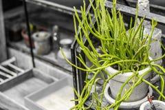 Plantera krukor var murgröna-stil garneringar på deformade hyllorna royaltyfri fotografi