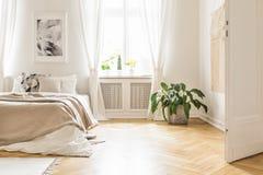 Plantera nära säng med filten i den vita sovruminre med stolpen royaltyfri bild