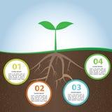 Plantera och rota mallen för den Infographic bakgrundsdesignen Royaltyfria Foton