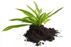 Plantera och smutsa. Arkivbild