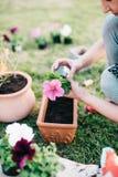 Plantera petunior arkivfoton