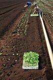 plantera plantor Royaltyfria Bilder