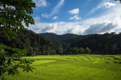 Plantera plantor för ett kaffe för växt för naturlig bakgrund för träd i ny naturgräsplan Royaltyfria Bilder