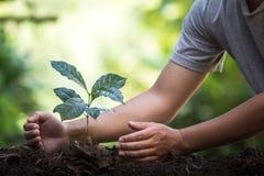 Plantera plantor för ett kaffe för växt för naturlig bakgrund för träd i ny naturgräsplan Royaltyfri Foto
