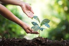 Plantera plantor för ett kaffe för växt för naturlig bakgrund för träd i ny naturgräsplan Arkivfoton