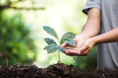 Plantera plantor för ett kaffe för växt för naturlig bakgrund för träd i ny naturgräsplan Arkivbild