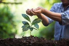 Plantera plantor för ett kaffe för växt för naturlig bakgrund för träd i ny naturgräsplan Royaltyfria Foton
