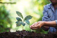 Plantera plantor för ett kaffe för växt för naturlig bakgrund för träd i ny naturgräsplan Arkivbilder