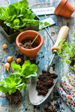 Plantera plantor i växthus Arkivbilder