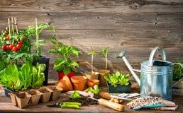 Plantera plantor i växthus Arkivbild