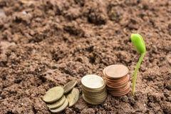 Plantera plantor och mynta på jordningen med kopieringsutrymme för bruk Arkivfoto