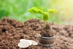 Plantera plantor och mynta på jordningen med kopieringsutrymme för bruk Arkivbilder