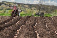 Plantera potatisar på hans land i byn Arkivfoton