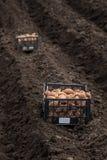 Plantera potatisar på hans land i byn Royaltyfri Fotografi