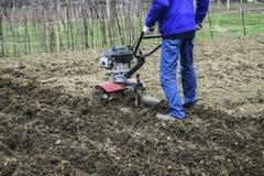 Plantera potatisar under gå-bak traktoren Fotografering för Bildbyråer