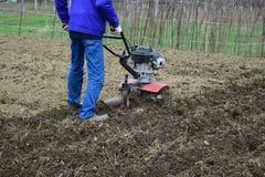 Plantera potatisar under gå-bak traktoren Royaltyfri Bild