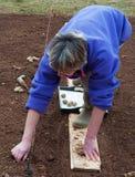 plantera potatisen Royaltyfria Bilder