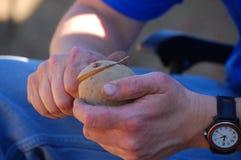 plantera röd säsong för potatisar Fotografering för Bildbyråer