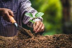 Plantera starka plantor för en trädpassionfrukt som planterar det unga trädet vid den gamla handen på jord som omsorg- och räddni royaltyfria foton