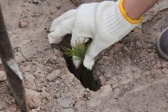 Plantera träden Arkivfoto