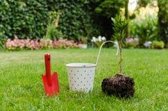 Plantera trädet i blommande trädgård Royaltyfri Foto