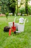 Plantera trädet i blommande trädgård Royaltyfria Foton