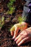 plantera treen Royaltyfria Bilder