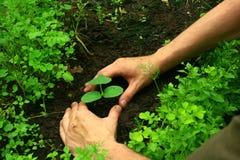 plantera treen Arkivfoton