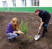 plantera trees Arkivbild