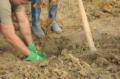 plantera trees Royaltyfri Foto