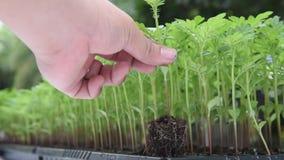 plantera trees