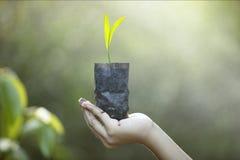 plantera trees plantera skogar, plantor, tillväxt, royaltyfria bilder