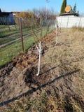 Plantera unga trädplantor i höst arkivbild