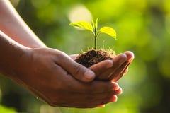 Plantera världen för räddningen för trädträdomsorg, skyddar händerna plantorna i natur och ljuset av aftonen fotografering för bildbyråer