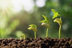 plantera växande moment med grön naturbakgrund royaltyfria bilder