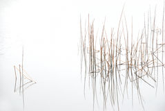 plantera vatten Arkivbild