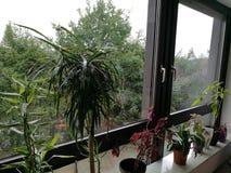 Planterar ans-fönster Royaltyfria Bilder
