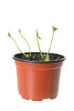 planterar barn Royaltyfri Bild