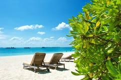 planterar blå green för stranden den tropiska skyen Royaltyfri Bild