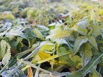 planterar den täta naturen för bakgrund upp ämne Royaltyfria Foton