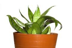 planterar fönstret Arkivfoton