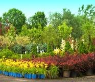 planterar försäljning Royaltyfria Bilder