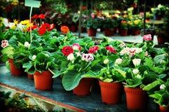 planterar försäljning Arkivfoto