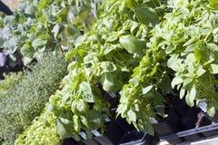 planterar försäljning Fotografering för Bildbyråer