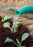 planterar grönsaken som bevattnar barn royaltyfria foton